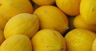 إسبانيا: أزمة قطاع إنتاج البطيخ الأصفر
