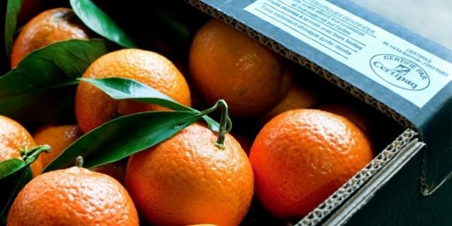 الأندلس: ارتفاع إنتاج الحمضيات بنسبة 12،3 في المئة