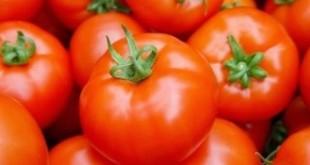 الحرب الإسبانية ضد الطماطم المغربية لا تزال مستمرة