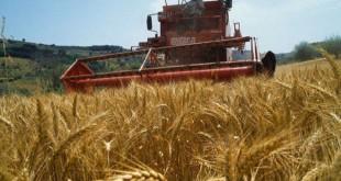 السعودية تطرح مناقصة لاستيراد 770 ألف طن من القمح