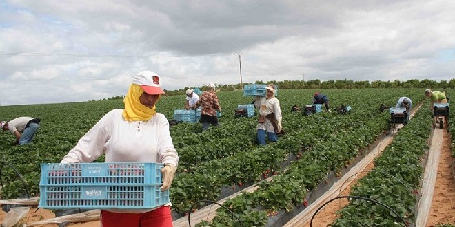 المغرب يحتل المرتبة الخامسة في المجال الفلاحي بإفريقيا
