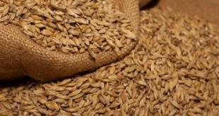 المملكة العربية السعودية تستورد 900 ألف طن من الشعير