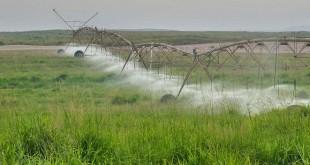 قطر: إطلاق مبادرة لدعم المزارع المحلية