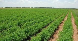 مخطط المغرب الأخضر يحقق نتائج جيدة بالجهة الشرقية