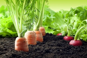 Plan Comptable agricole