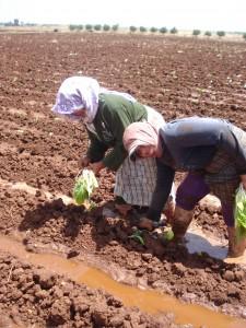 Plan Maroc Vert, un bilan positif