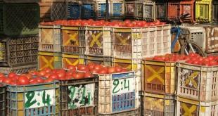 APEFEL: les producteurs de tomate crient leur ras-le-bol