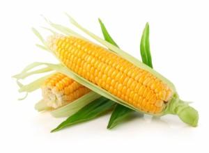 La production mondiale de maïs a été revue à la baisse à cause d'une sécheresse en Afrique du Sud, selon les estimations mensuelles publiées le 12 janvier par le gouvernement américain.