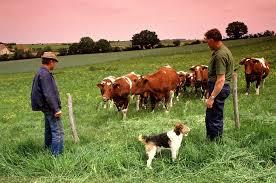 Hausse des revenus des agriculteurs en France.