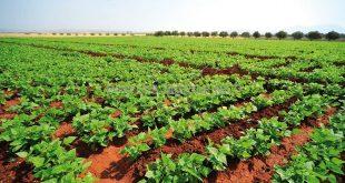 agriculture fiscalité maroc