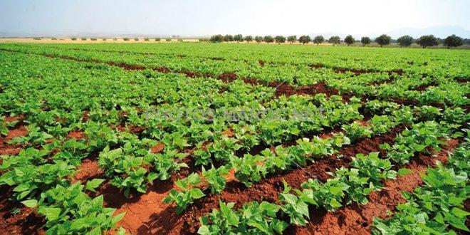 Coopération Maroc-Chine : Des opportunités agricoles prometteuses en vue