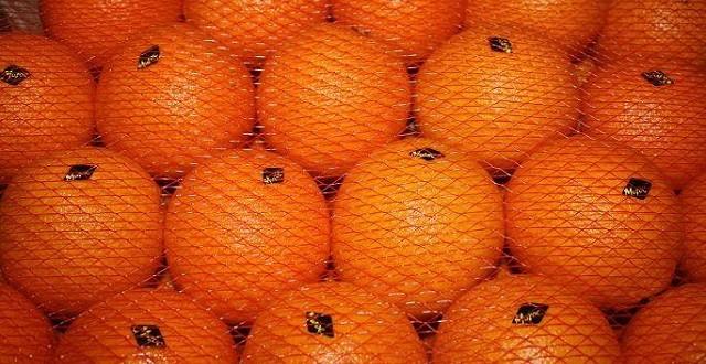 exportations d'agrumes marocaines