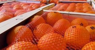 Akhannouch et les exportateurs de fruits et légumes explorent la Russie