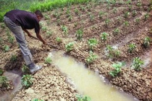 Meknès: L'agriculture et la sécurité alimentaire au fil de l'eau