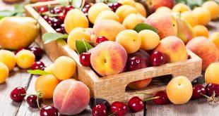 Le Maroc atteint un record dans ses exportations agroalimentaires avec un volume de 3,1 millions de tonnes