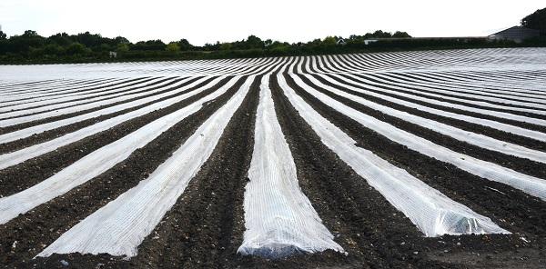 80 000 à 160 000 tonnes de bâches de serres agricoles en provenance d'Espagne sur le marché marocain