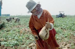 Béni Mellal-Khénifra: Une région agricole à préserver et à développer