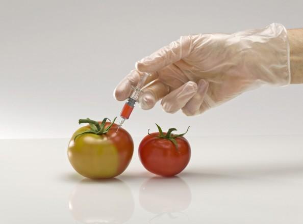 Fusion entre Monsanto et Bayer: Un danger dans nos assiettes ?