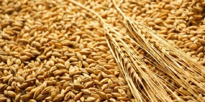 Suspension des droits d'importation du blé tendre et dérivés au Maroc