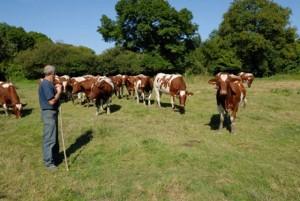 Les élevages bovins sont en situation d'urgence en France