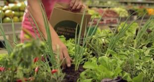 Brésil: Un potager de légumes dans un supermarché ?
