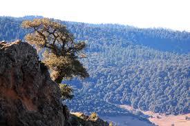 La forêt marocaine, une priorité du CAM