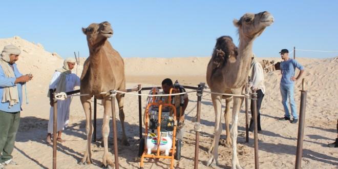 Laâyoune: journée d'info sur les produits camelins