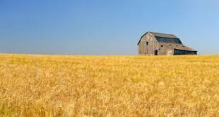 La situation actuelle du secteur agricole au Canada