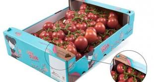 Et si les plants de tomate servaient à fabriquer des emballages fruits et légumes ?