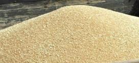 ONICL annonce 13,9 millions de quintaux de céréales récoltés en 2014