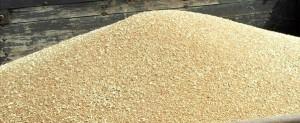 La collecte cumulée des céréales, constituée à 98,2% de blé tendre, a atteint 12,9 millions de quintaux (Mqx) à fin octobre 2014, annonce de l'ONICL.
