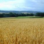La Chine prévoit d'augmenter sa consommation et ses stocks de grains
