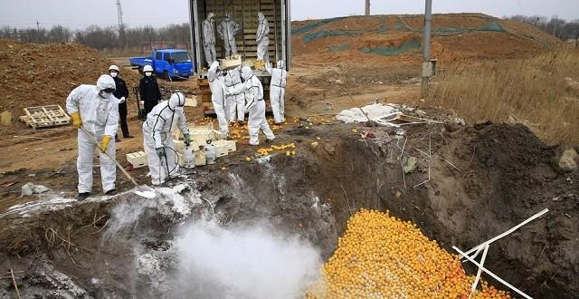 20 tonnes d'agrumes espagnols détruites en Chine!