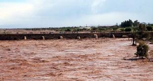 Dégâts importants sur l'agriculture à Ksar El Kebir