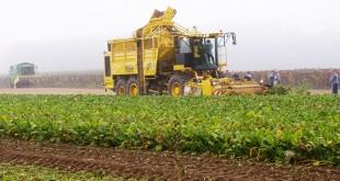 Désherbage de la betterave : Le désherbage mécanique combiné s'avère plus écolo
