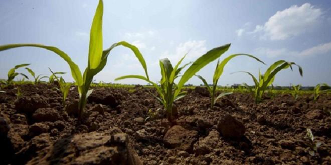 Drâa-Tafilalet: Enquête sur les chaines de production agricole