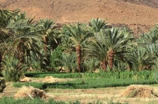 Drâa-Tafilalet: Plus de 237 MDH pour le programme ANDZOA
