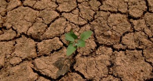 sécheresse agriculture maroc