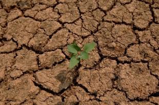 Drâa-Tafilalet: Une sècheresse se profile à l'horizon