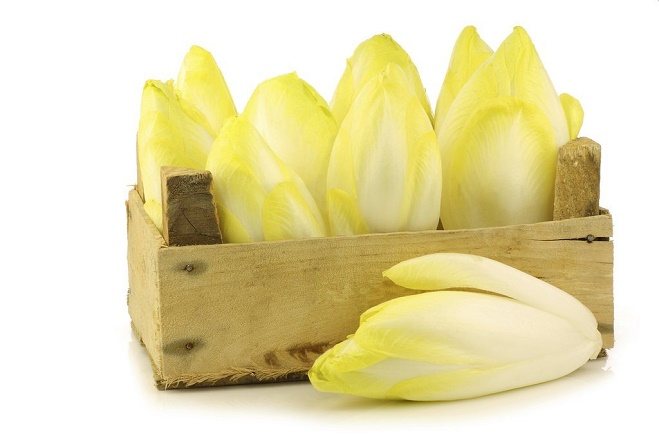 ENDIVE, CHICON OU WITLOOF