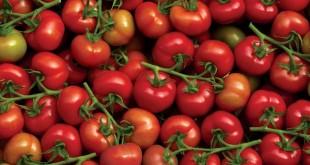L'Egypte veut exporter ses tomates vers la Russie