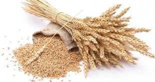 Les cours du blé européen sauvés par l'Egypte