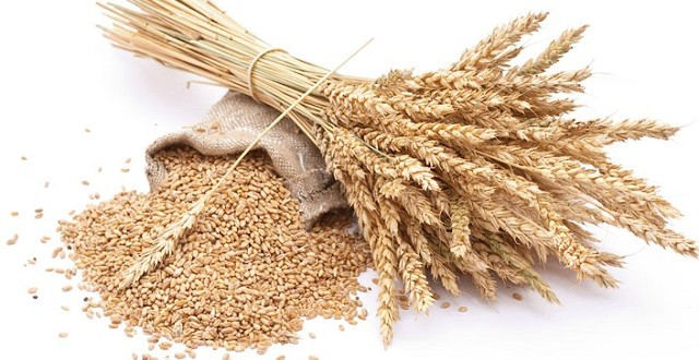 Blé: Le Maroc atteint un record dans l'importation du blé français avec 420.000 tonnes