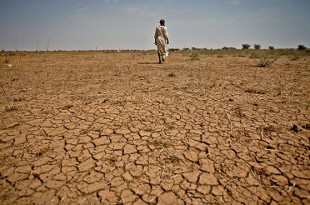 Selon l'Organisation des Nations unies pour l'alimentation et l'agriculture, le phénomène climatique El Niño devrait engendrer d'importantes pertes de récoltes en Afrique