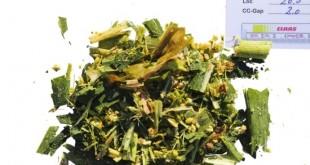 Le maïs Shredlage, la révolution en technique d'ensilage