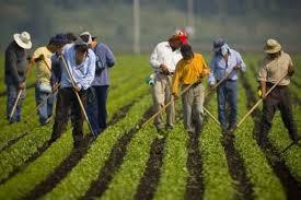 Espagne, des ouvriers clandestins dans des conditions abusives