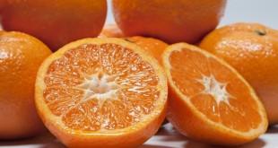 L'Espagne a lancé trois nouvelles variétés d'agrumes