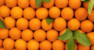 En Espagne le prix des oranges explose!