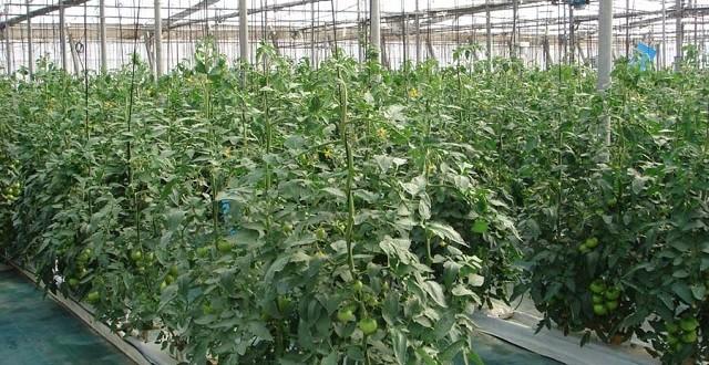 L'Espagne déplace sa production horticole au Maroc
