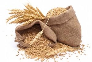 Selon une étude publiée récemment, le rendement mondial des céréales a connu une baisse de 10 % entre 1964 et 2007. Les pertes sont encore énormes ces dernières années.